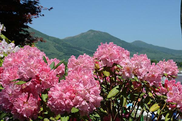 13蒜山高原しゃくなげ祭り