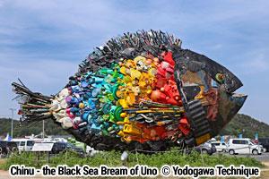 Chinu - the Black Sea Bream of Uno (thumbnail)