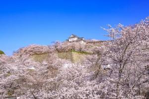 21.津山城(鶴山公園)2