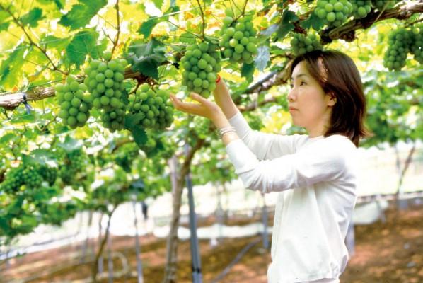 8.くぼ観光農園