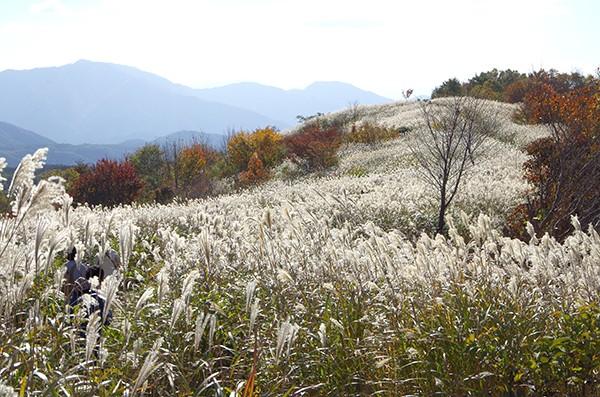 ㈯蒜山高原