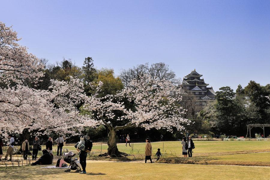 岡山後楽園_桜2