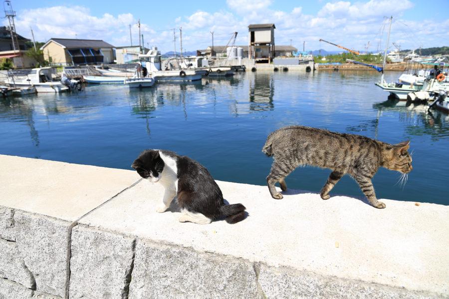 真鍋島‗ネコ