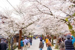 Gaisen Cherry Trees