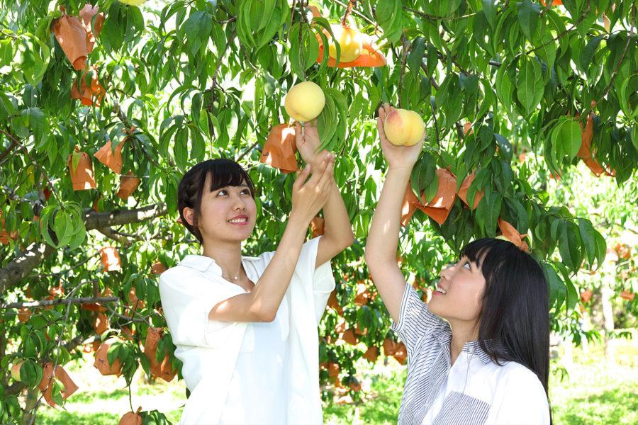 ★桃狩り-001_R