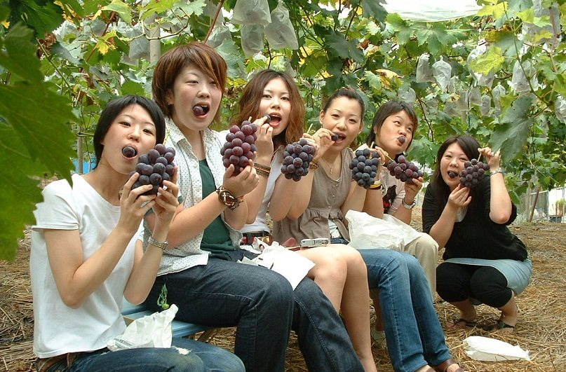 桃ぶどう狩りイメージ写真(桃茂実苑想定)