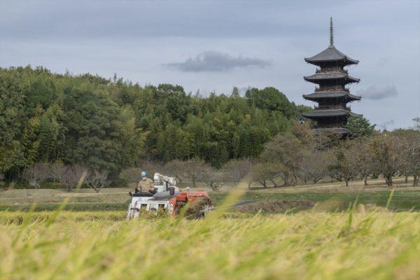 kokubunji (1)